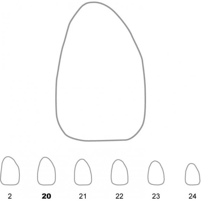 UnoDent Temporary Crowns Upper Lateral Incisors Right 20