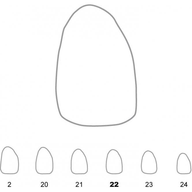 UnoDent Temporary Crowns Upper Lateral Incisors Right 22